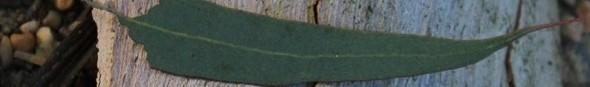 cropped-leaf2.jpg
